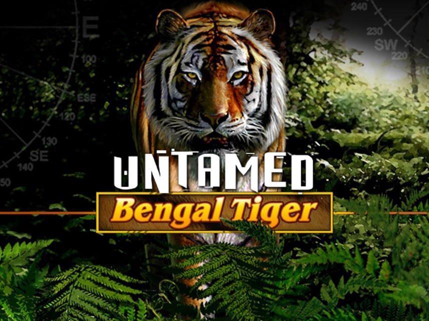 dikiy-bengalskiy-tigr-kazino