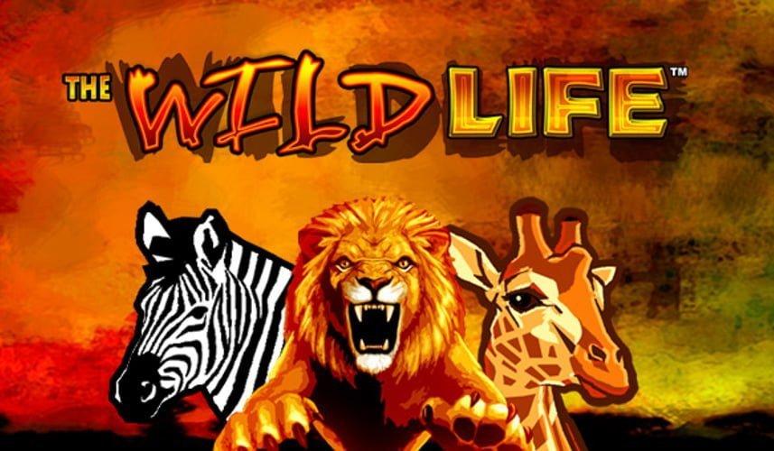 Best online rtg casinos games