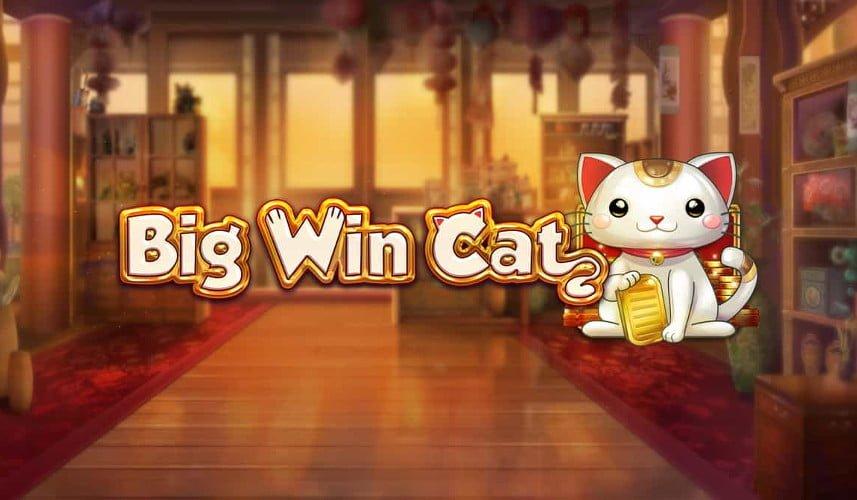 big win cat play n go