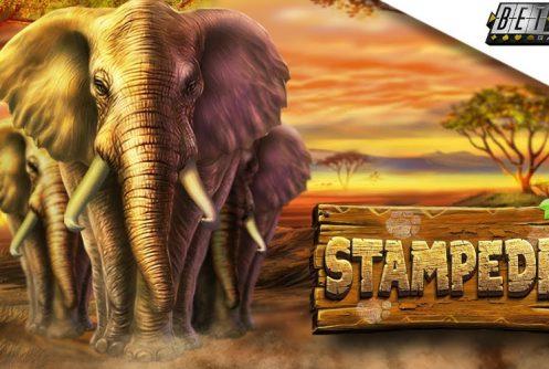 stampeded casino